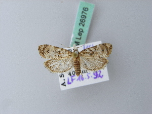 (Phtheochroa rugosana - BC ZSM Lep 26976)  @13 [ ] CreativeCommons - Attribution Non-Commercial Share-Alike (2010) Axel Hausmann SNSB, Zoologische Staatssammlung Muenchen