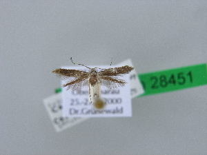 ( - BC ZSM Lep 28451)  @11 [ ] Copyright (2010) Axel Hausmann/Bavarian State Collection of Zoology (ZSM) SNSB, Zoologische Staatssammlung Muenchen