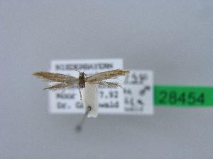 ( - BC ZSM Lep 28454)  @11 [ ] Copyright (2010) Axel Hausmann/Bavarian State Collection of Zoology (ZSM) SNSB, Zoologische Staatssammlung Muenchen