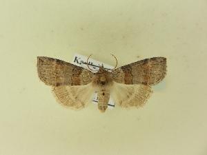 ( - BC ZSM Lep 91422)  @11 [ ] by-nc-sa (2016) SNSB, Staatliche Naturwissenschaftliche Sammlungen Bayerns ZSM (SNSB, Zoologische Staatssammlung Muenchen)