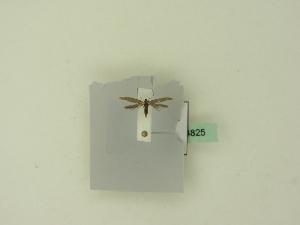( - BC ZSM Lep 94825)  @11 [ ] by-nc-sa (2016) SNSB, Staatliche Naturwissenschaftliche Sammlungen Bayerns ZSM (SNSB, Zoologische Staatssammlung Muenchen)