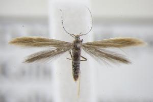 ( - BC ZSM Lep 94980)  @13 [ ] by-nc-sa (2016) SNSB, Staatliche Naturwissenschaftliche Sammlungen Bayerns ZSM (SNSB, Zoologische Staatssammlung Muenchen)