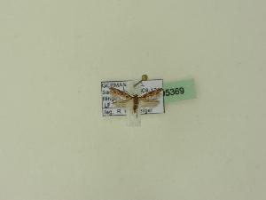 ( - BC ZSM Lep 95369)  @12 [ ] CreativeCommons - Attribution Non-Commercial Share-Alike (2016) SNSB, Staatliche Naturwissenschaftliche Sammlungen Bayerns ZSM (SNSB, Zoologische Staatssammlung Muenchen)