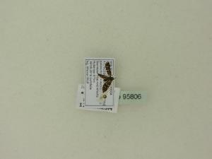 ( - BC ZSM Lep 95806)  @11 [ ] Unspecified (default): All Rights Reserved  SNSB, Staatliche Naturwissenschaftliche Sammlungen Bayerns ZSM (SNSB, Zoologische Staatssammlung Muenchen)