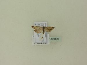 ( - BC ZSM Lep 95809)  @12 [ ] Unspecified (default): All Rights Reserved  SNSB, Staatliche Naturwissenschaftliche Sammlungen Bayerns ZSM (SNSB, Zoologische Staatssammlung Muenchen)