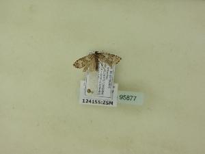 ( - BC ZSM Lep 95877)  @12 [ ] Unspecified (default): All Rights Reserved  SNSB, Staatliche Naturwissenschaftliche Sammlungen Bayerns ZSM (SNSB, Zoologische Staatssammlung Muenchen)