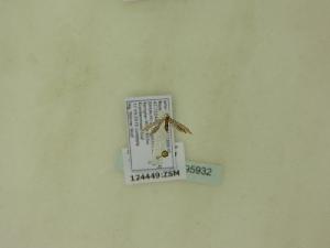 ( - BC ZSM Lep 95932)  @11 [ ] Unspecified (default): All Rights Reserved  SNSB, Staatliche Naturwissenschaftliche Sammlungen Bayerns ZSM (SNSB, Zoologische Staatssammlung Muenchen)