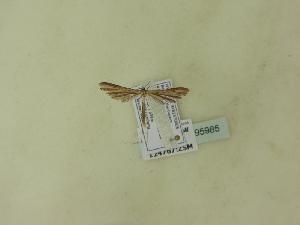 ( - BC ZSM Lep 95985)  @11 [ ] Unspecified (default): All Rights Reserved  SNSB, Staatliche Naturwissenschaftliche Sammlungen Bayerns ZSM (SNSB, Zoologische Staatssammlung Muenchen)