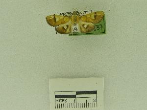 (Nosophora sp. AAI3535 - USNM ENT 00669338)  @12 [ ] Unspecified (default): All Rights Reserved  Unspecified Unspecified