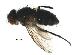 (Chaetostigmoptera - BIOUG19726-H03)  @15 [ ] CreativeCommons - Attribution Non-Commercial Share-Alike (2016) CBG Photography Group Centre for Biodiversity Genomics