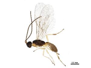 (Mesostoinae - BIOUG23247-A04)  @15 [ ] CreativeCommons - Attribution Non-Commercial Share-Alike (2015) CBG Photography Group Centre for Biodiversity Genomics