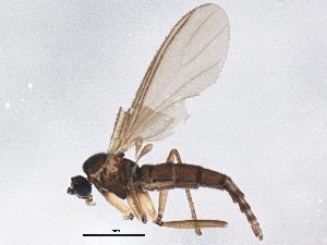 (Trichosia flavicoxa - BIOUG04114-B07)  @13 [ ] CreativeCommons - Attribution Non-Commercial Share-Alike (2013) CBG Photography Group Centre for Biodiversity Genomics