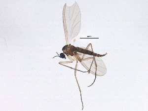 (Camptochaeta fallax - BIOUG04114-D01)  @13 [ ] CreativeCommons - Attribution Non-Commercial Share-Alike (2013) CBG Photography Group Centre for Biodiversity Genomics