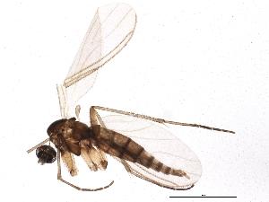 (Camptochaeta uniformis - BIOUG04090-E04)  @14 [ ] CreativeCommons - Attribution Non-Commercial Share-Alike (2013) CBG Photography Group Centre for Biodiversity Genomics