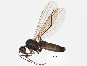 (Brachystomatidae - BIOUG04153-H07)  @15 [ ] CreativeCommons - Attribution Non-Commercial Share-Alike (2013) CBG Photography Group Centre for Biodiversity Genomics