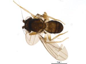 (Inbiomyiidae - BIOUG05026-F04)  @11 [ ] CreativeCommons - Attribution Non-Commercial Share-Alike (2015) CBG Photography Group Centre for Biodiversity Genomics