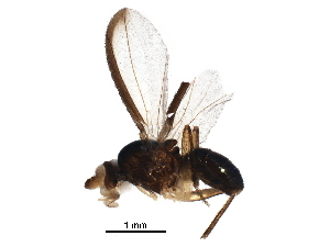 (Marginidae - BIOUG19836-H10)  @11 [ ] CreativeCommons - Attribution Non-Commercial Share-Alike (2017) CBG Photography Group Centre for Biodiversity Genomics