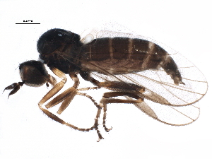 (Trichininae - BIOUG15594-G07)  @14 [ ] CreativeCommons - Attribution Non-Commercial Share-Alike (2015) CBG Photography Group Centre for Biodiversity Genomics
