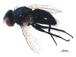 (Ligeria - BIOUG12521-C03)  @14 [ ] CreativeCommons - Attribution Non-Commercial Share-Alike (2015) CBG Photography Group Centre for Biodiversity Genomics