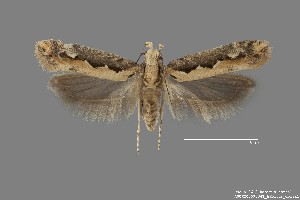 ( - DNA_SL0612)  @11 [ ] Copyright (2017) Sangmi Lee Arizona State University Hasbrouck Insect Collection