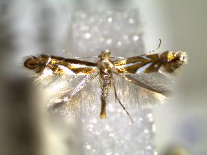 ( - CLV6262)  @13 [ ] CreativeCommons – Attribution Non-Commercial Share-Alike (2016) Carlos Lopez Vaamonde Institut National de la Recherche Agronomique, Zoologie Forestiere