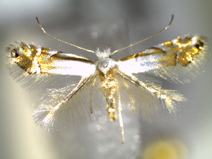 ( - CLV6269)  @13 [ ] CreativeCommons – Attribution Non-Commercial Share-Alike (2016) Carlos Lopez Vaamonde Institut National de la Recherche Agronomique, Zoologie Forestiere
