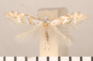 ( - CLV2681)  @12 [ ] Copyright (2011) David C. Lees Research Collection of David C. Lees