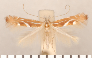 ( - CLV2690)  @12 [ ] Copyright (2011) David C. Lees Research Collection of David C. Lees
