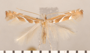 ( - CLV2691)  @12 [ ] Copyright (2011) David C. Lees Research Collection of David C. Lees