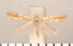 ( - CLV2729)  @12 [ ] Copyright (2011) David C. Lees Research Collection of David C. Lees