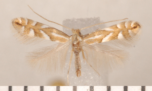 ( - CLV2737)  @14 [ ] Copyright (2011) David C. Lees Research Collection of David C. Lees