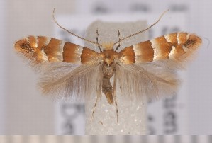 ( - CLV1569)  @13 [ ] Copyright (2011) David C. Lees Research Collection of David C. Lees