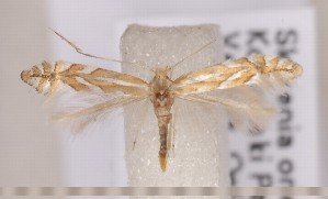 ( - CLV1584)  @14 [ ] Copyright (2011) David C. Lees Research Collection of David C. Lees