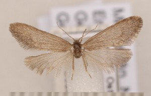 ( - CLV1727)  @13 [ ] Copyright (2010) David C. Lees Research Collection of David C. Lees