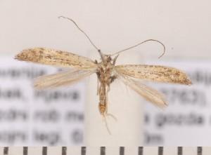 (Aspilapteryx - CLV2193)  @14 [ ] Copyright (2011) David C. Lees Unspecified