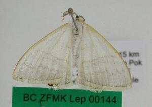 (Micronissa - BC ZFMK Lep 00144)  @13 [ ] Copyright (2010) Dieter Stuening Zoologisches Forschungsmuseum Alexander Koenig, Bonn