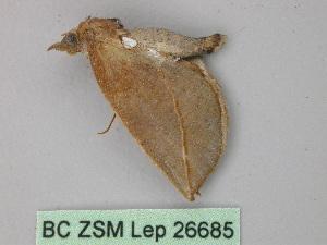 (Rhinoligia - BC ZSM Lep 26685)  @13 [ ] CreativeCommons - Attribution Non-Commercial Share-Alike (2010) Axel Hausmann SNSB, Zoologische Staatssammlung Muenchen