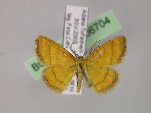(Cleta - BC ZSM Lep 06704)  @15 [ ] Copyright (2010) Axel Hausmann/Bavarian State Collection of Zoology (ZSM) SNSB, Zoologische Staatssammlung Muenchen