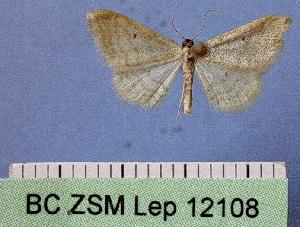 ( - BC ZSM Lep 12108)  @12 [ ] Copyright (2010) Axel Hausmann/Bavarian State Collection of Zoology (ZSM) SNSB, Zoologische Staatssammlung Muenchen