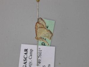 (Scopula minuta - BC ZSM Lep 24542)  @11 [ ] CreativeCommons - Attribution Non-Commercial Share-Alike (2010) Axel Hausmann SNSB, Zoologische Staatssammlung Muenchen