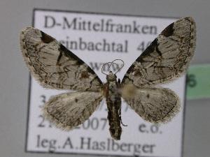 ( - BC ZSM Lep 22776)  @14 [ ] Copyright (2010) Axel Hausmann/Bavarian State Collection of Zoology (ZSM) SNSB, Zoologische Staatssammlung Muenchen