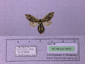 ( - BC AB Lep 00070)  @14 [ ] Copyright (2010) Andreas Bergmann Research Collection of Andreas Bergmann