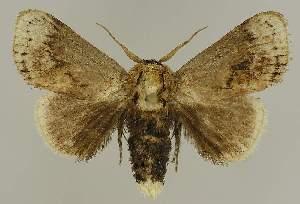 (Mecytha dnophera - BC EF Lep 03303)  @15 [ ] Copyright (2010) Egbert Friedrich Research Collection of Egbert Friedrich