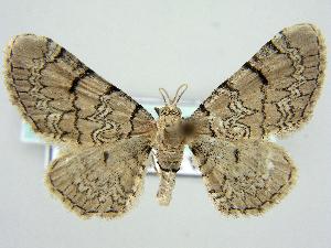 ( - RCIM 0133)  @13 [ ] Copyright (2010) Iva Mihoci Croatian Natural History Museum