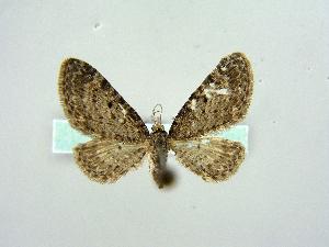 ( - RCIM 0150)  @13 [ ] Copyright (2010) Iva Mihoci Croatian Natural History Museum