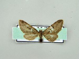 ( - RCIM 0153)  @12 [ ] Copyright (2010) Iva Mihoci Croatian Natural History Museum