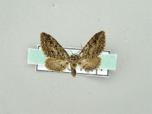 ( - RCIM 0159)  @12 [ ] Copyright (2010) Iva Mihoci Croatian Natural History Museum