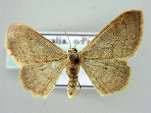 ( - RCIM 0167)  @13 [ ] Copyright (2010) Iva Mihoci Croatian Natural History Museum