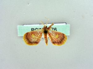( - RCIM 0176)  @11 [ ] Copyright (2010) Iva Mihoci Croatian Natural History Museum