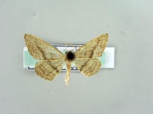 ( - RCIM 0177)  @13 [ ] Copyright (2010) Iva Mihoci Croatian Natural History Museum